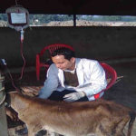 Transfusion of Blood in Anemic Calf