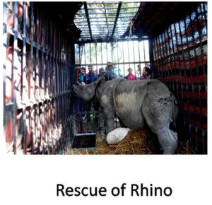 Rescue of Rhino